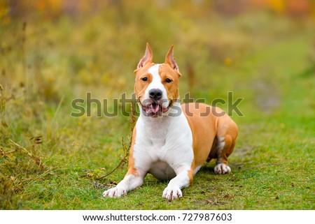 dog #727987603