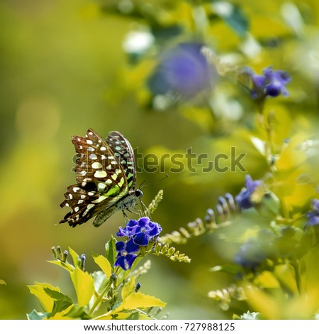 Beautiful Butterfly  fluttering over a flower in a garden,blurry background shallow dept of field #727988125