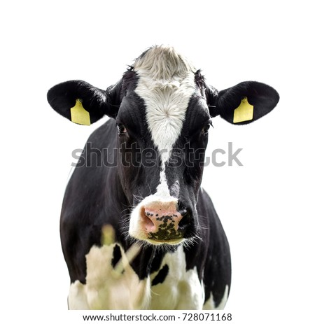 Funny cute cow isolated on white #728071168