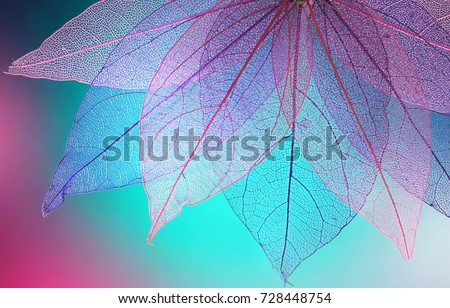 Macro leaves background texture blue, turquoise, pink color. Transparent skeleton leaves. Bright expressive colorful beautiful artistic image of nature. Royalty-Free Stock Photo #728448754