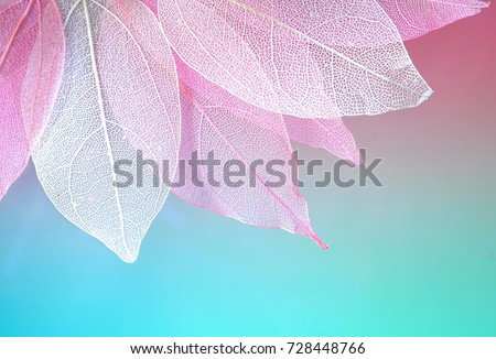 Macro leaves background texture blue, turquoise, pink color. Transparent skeleton leaves. Bright expressive colorful beautiful artistic image of nature. #728448766