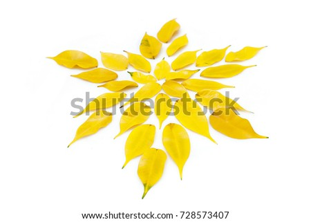 A pattern of yellow leaves with shadows on a white surface #728573407