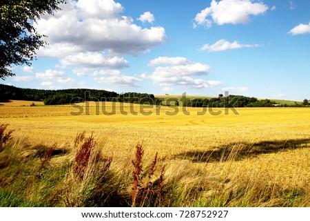 Summer field #728752927