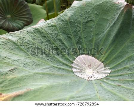 water drop on the lotus leaf #728792854