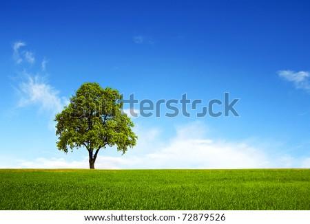Field,tree and blue sky #72879526