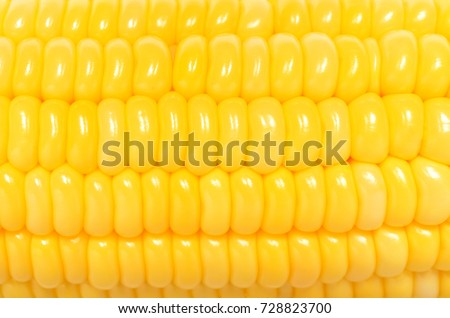 Top view close up photo image of yellow sweetcorn grain on cob, dense rows of corn seeds as  background, overlay for art work