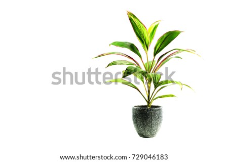 Green potted plant, trees in the pot isolated on white background. #729046183