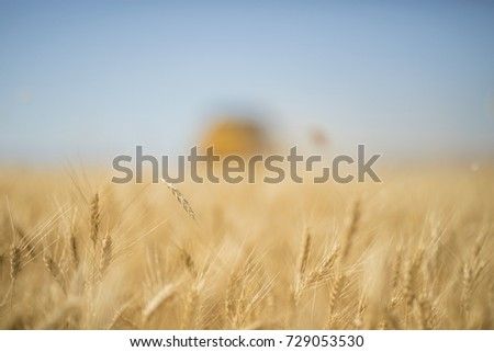 Combine harvester gathers the wheat crop #729053530