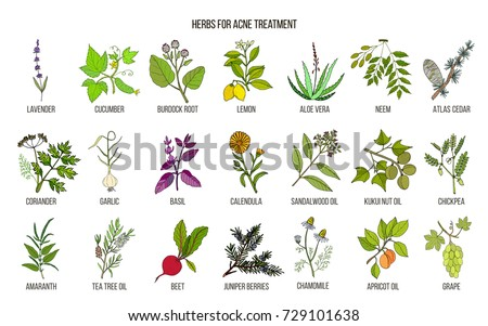 Best herbs for acne treatment. Hand drawn vector set of medicinal plants #729101638