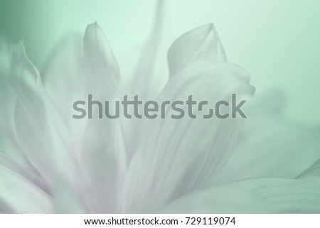 Flower turquoise-pink background of dahlias petals. Macro photography. Soft focus. Nature. #729119074