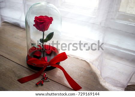 Long-lasting rose in a flask, in a glass dome, stabilized, a gift #729169144