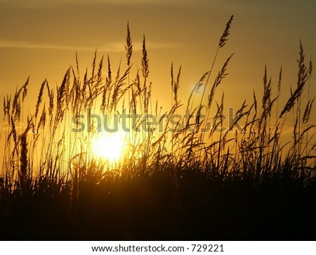 Golden Sunset and Grass in contra. #729221