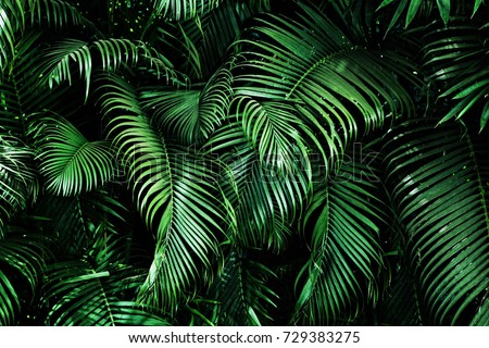 Tropical palm leaves, floral pattern background, real photo Royalty-Free Stock Photo #729383275