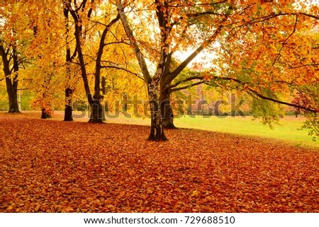 Beautiful view of park with colorful leaves on bright sunny autumn day #729688510