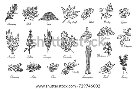 kitchen herbs and spices, vector doodle sketch set #729746002