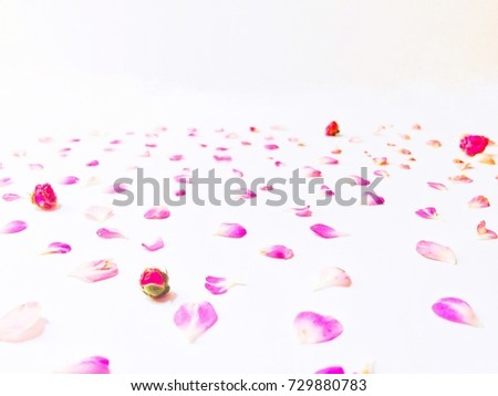 Beautiful pink flowers background, decorative background for things #729880783
