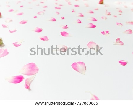 Beautiful pink flowers background, decorative background for things #729880885