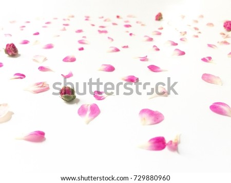 Beautiful pink flowers background, decorative background for things #729880960