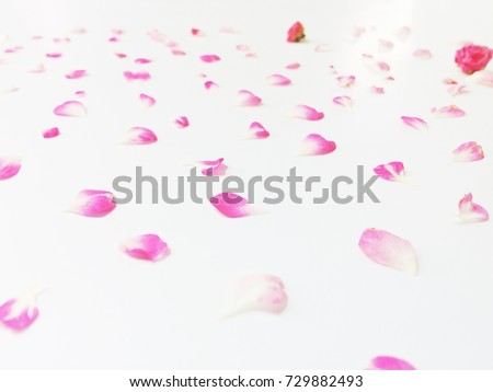 Beautiful pink flowers background, decorative background for things #729882493