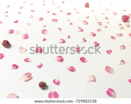 Beautiful pink flowers background, decorative background for things #729882538
