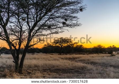 African Sunset #730017628