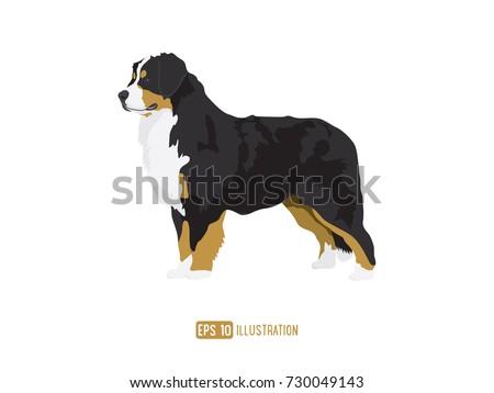 Bernese Mountain Dog Illustration #730049143