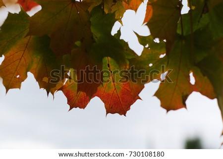 colorful fall foliage  #730108180