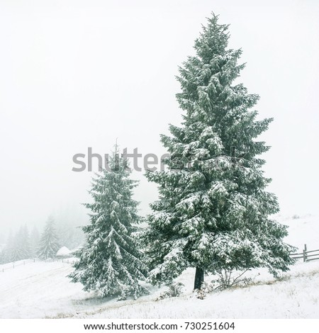 Beautiful winter landscape with snow covered trees #730251604