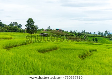Terraced rice fields at Pa pong Pieng in Chiang Mai, Thailand  #730337590