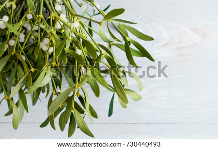 Branch mistletoe close up on wood desk. Happy new year