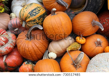 Display of pumpkins in hot house environment in Singapore