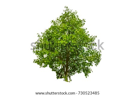Tree on white background #730523485