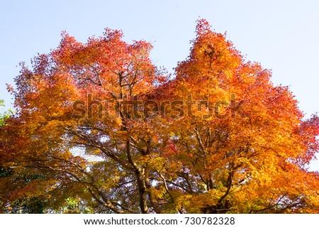 Autumn leaves #730782328