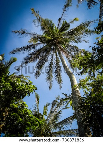 Coconut Tree Philippines #730871836