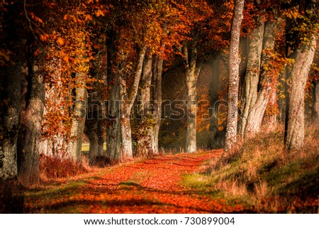 Autumn in the forest with light rays and red, golden leaves. Chestnut trees #730899004