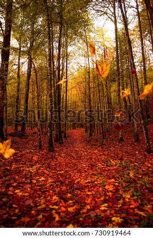 Colors of autumn! What a great looking forest #730919464