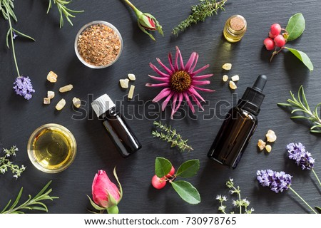 Bottles of essential oil with rosemary, thyme, creeping thyme, echinacea, wintergreen, lavender, myrrh, frankincense and rose buds on a dark background #730978765