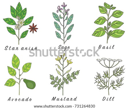 Set of spices, herbs and officinale plants icons. Healing plants. Medicinal plants, herbs, spices hand drawn illustrations. Botanic sketches icons. #731264830