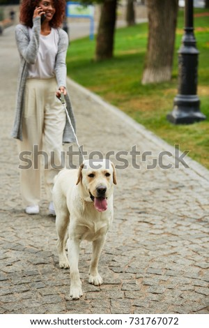 Young busy beautiful african lady in casual walking with dog and talking on phone in park #731767072