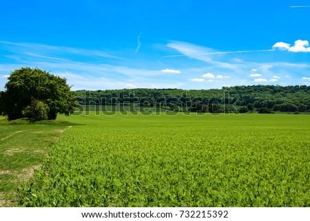 English countryside #732215392