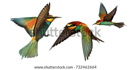 set of color birds in flight isolated on a white background #732462664