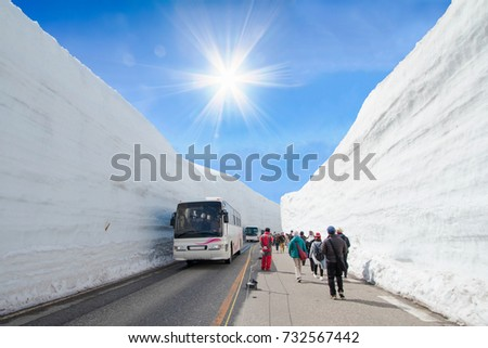 The snow mountains wall of Tateyama Kurobe alpine  with blue sky  background is  one of the most important and popular natural place in Toyama Prefecture, Japan. #732567442