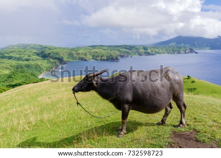 Marlboro Hills at Batan Island , Batanes, Philippines #732598723