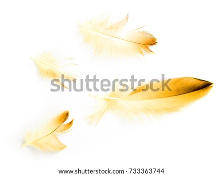 bird feather on white background #733363744