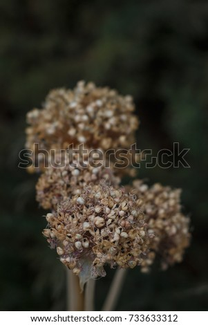 dried flower in the garden near with old grass #733633312
