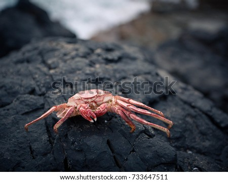 Crab on summer beach and  rocks. #733647511