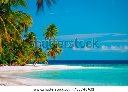 tropical sand beach #733746481
