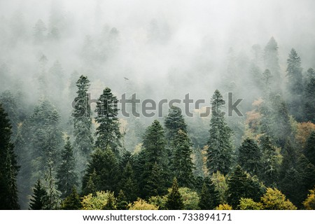 beautiful misty forest morning in the mountains.