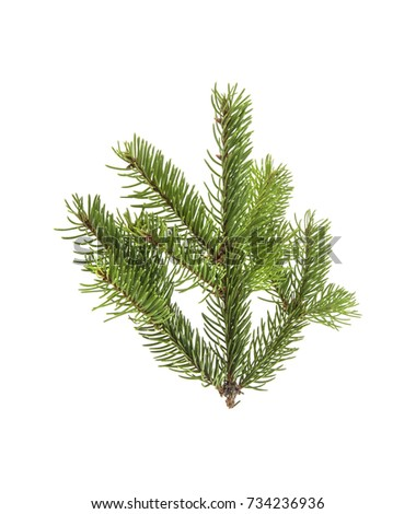 branch of Christmas tree isolated on white background #734236936