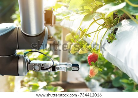 Agriculture technology , artificial intelligence concepts, Farmer use smart farm automation robot assistant image processing for detection weed ,spray chemical , replace worker and increase precision. #734412016